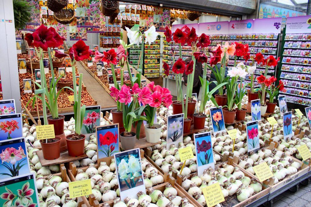 Высылают цветы по почте - магазины, подарить