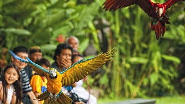 8 самых лучших экскурсий на Бали