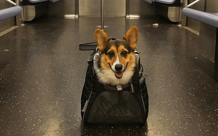 В отпуск с животным: правила перевозки на различных видах транспорта