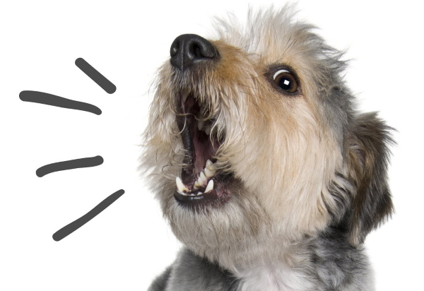 dog-barking-square